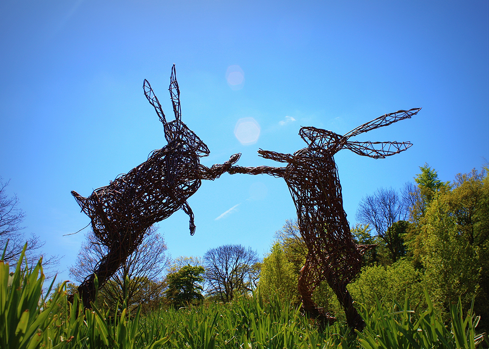 Willow Hare Sculpture Day Course